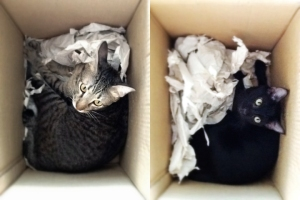 Twister and Wednesday in a box