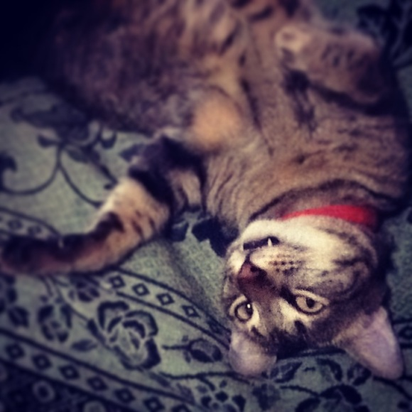 Twister the Vampire Cat