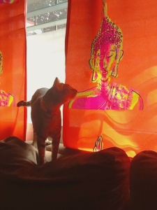 Twister contemplates on my Buddha draperies.